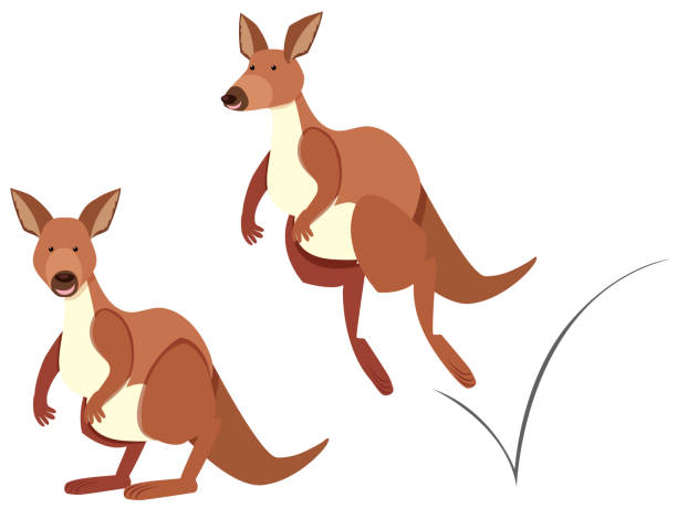 kangaroo hopping on white background - kangaroo stock illustrations