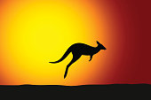 Kangaroo jumping front the sun