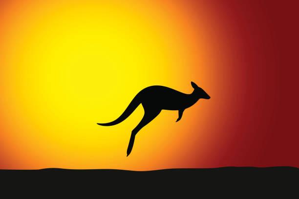 kangaroo jumping front the sun - kangaroo stock illustrations