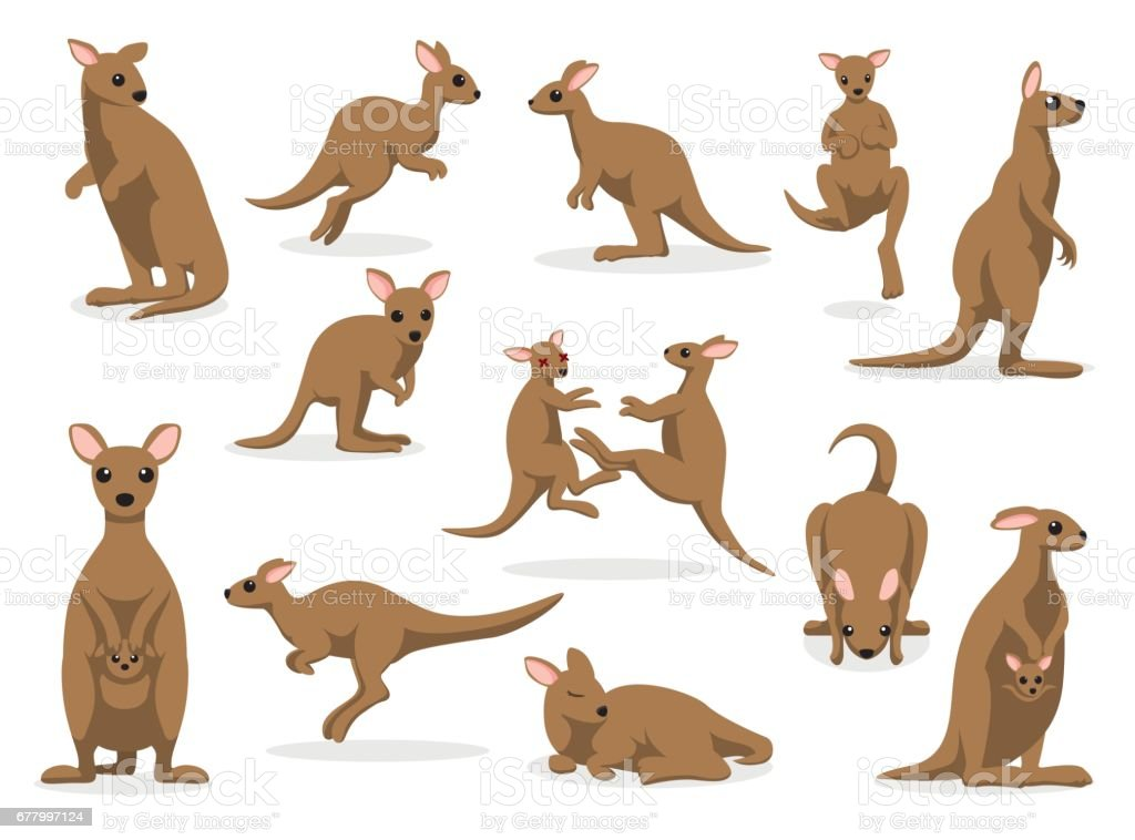 12 Kangaroo Poses Vector Illustration