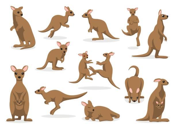 12 Kangaroo Poses Vector Illustration Animal Cartoon EPS10 File Format kangaroo stock illustrations
