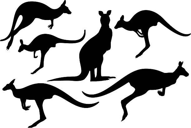 Kangaroos silhouette Hi Quality Kangaroos silhouette kangaroo stock illustrations