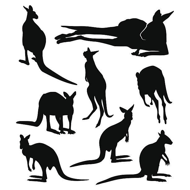 Kangaroos Kangaroo silhouette set kangaroo stock illustrations
