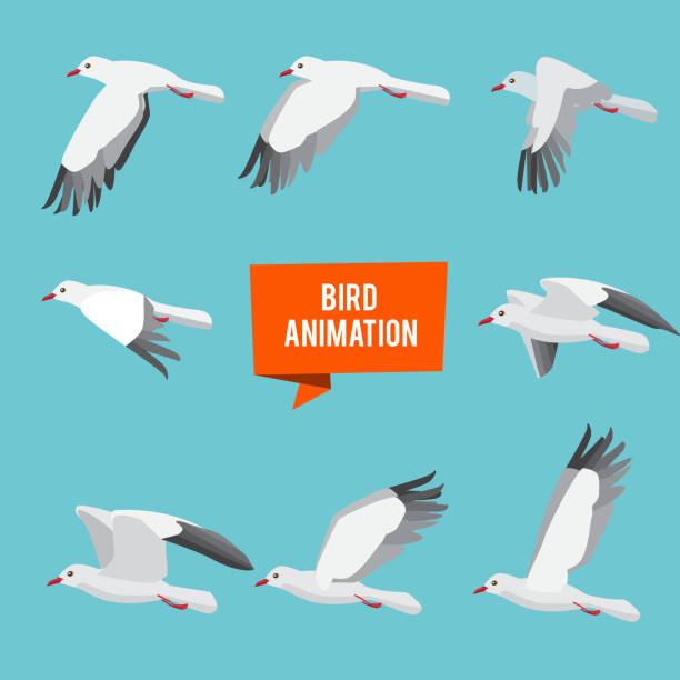 Key frames of animation flying bird vector art illustration