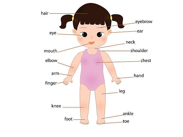 ilustrações de stock, clip art, desenhos animados e ícones de kid anatomy - tronco nu