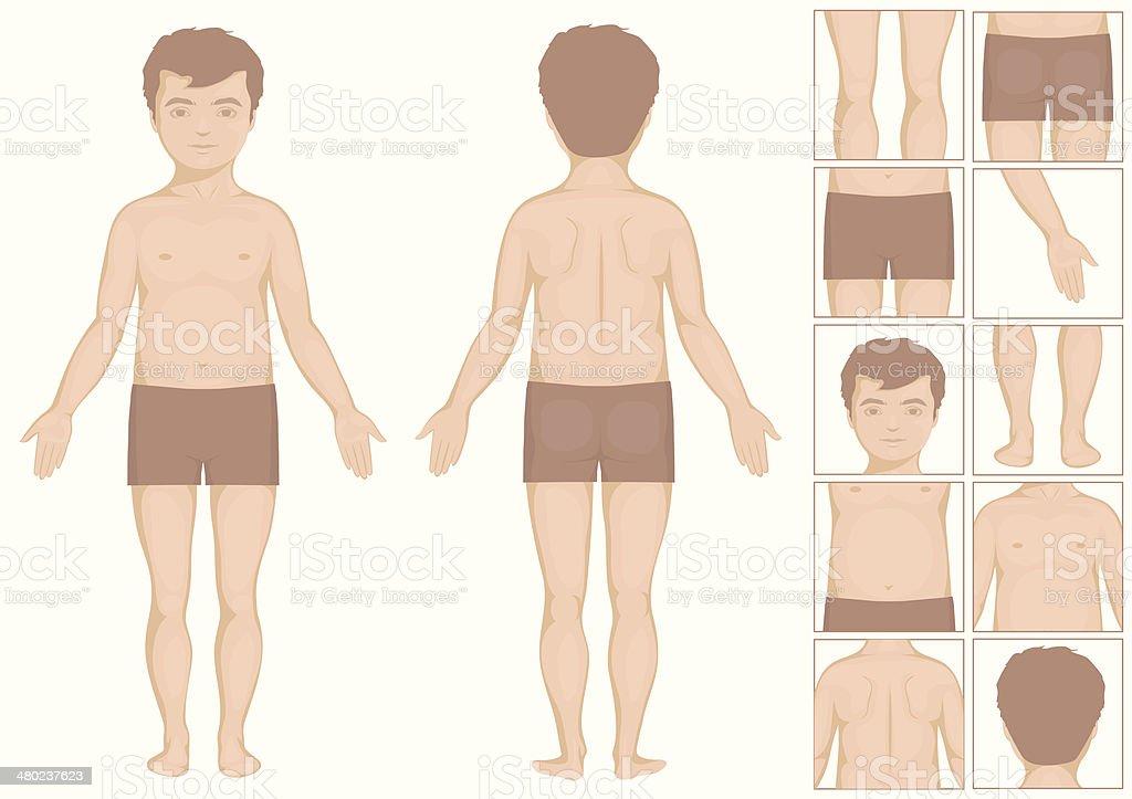 Kid Körper Parts Stock Vektor Art und mehr Bilder von Anatomie ...