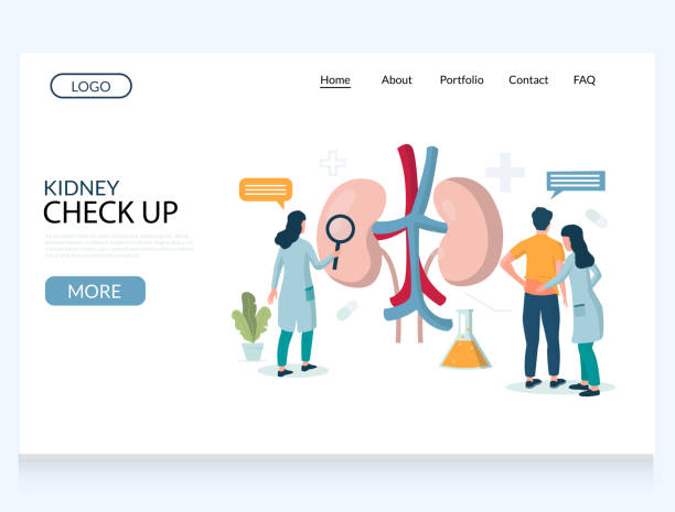 ilustrações de stock, clip art, desenhos animados e ícones de kidney check up vector website landing page design template - diálise