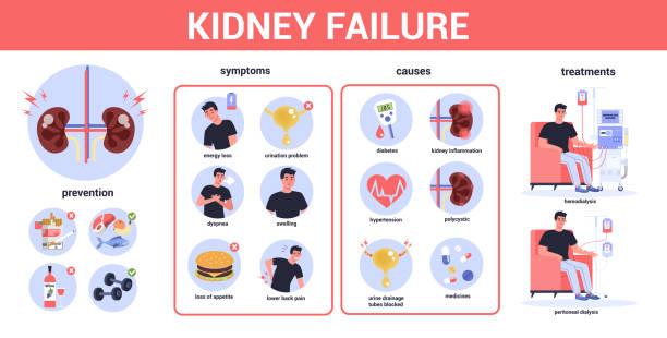 ilustrações de stock, clip art, desenhos animados e ícones de kidney failure infographic. symptoms, causes, prevention and treatment. idea of medical - diálise