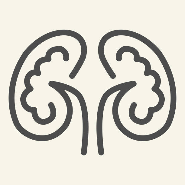 Kidney line icon. Kidneys symbol outline style pictogram on white background. Human urology system for mobile concept and web design. Vector graphics. Kidney line icon. Kidneys symbol outline style pictogram on white background. Human urology system for mobile concept and web design. Vector graphics image stock illustrations