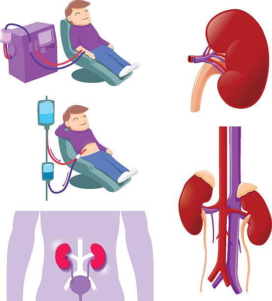 ilustrações de stock, clip art, desenhos animados e ícones de rim médico - diálise