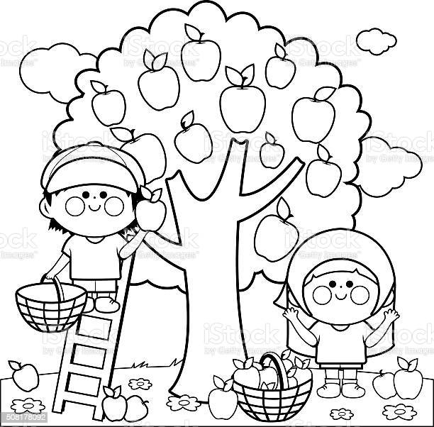 coloring book ~ Fruit 791x1024 Coloring Books For Kids Fruits Book ...   602x612
