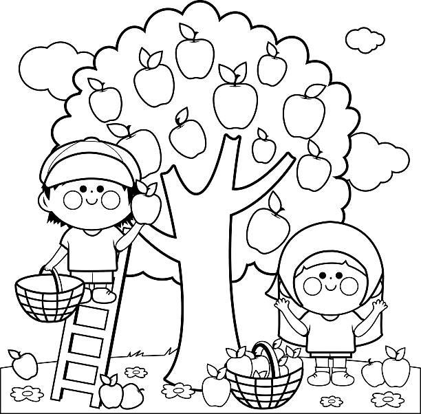 illustrazioni stock, clip art, cartoni animati e icone di tendenza di bambini raccolta mele libro da colorare pagina - raccogliere frutta
