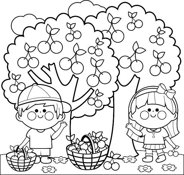 ilustrações de stock, clip art, desenhos animados e ícones de crianças colheita cerejas livro de colorir página - picking fruit