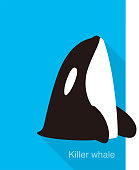 Killer Whale jumping from the sea flat icon design , vector illustration