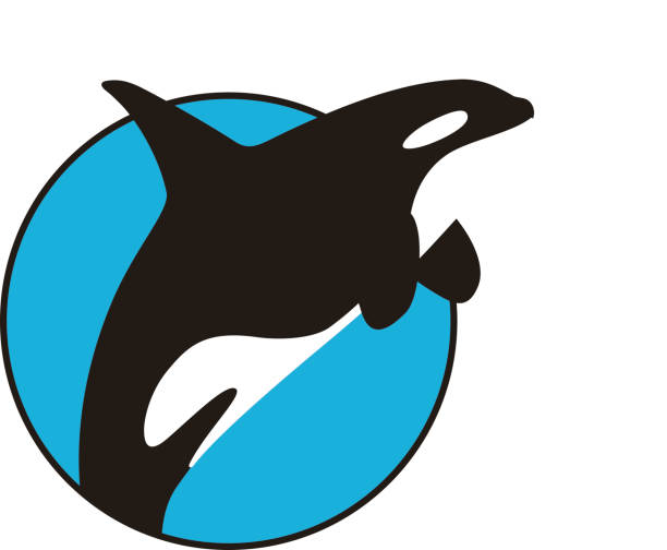 Killer Whale jumping in the sea flat icon design Killer Whale jumping in the sea flat icon design, vector illustration killer whale stock illustrations