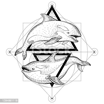 istock Killer whale orca tattoo. Geometric vector illustration with triangles and sea animals. Sketch logo in hipster vintage style. Hand drawn art, black line engraved poster isolated on white background 1284861118