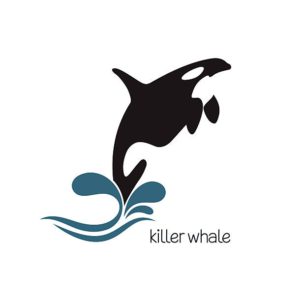 Killer whale Killer whale jumping out of water killer whale stock illustrations