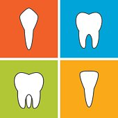 Tooth types. Dental vector illustration. Flat outline