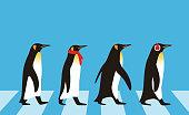 istock King Penguin walking, Penguin seed series 517409296