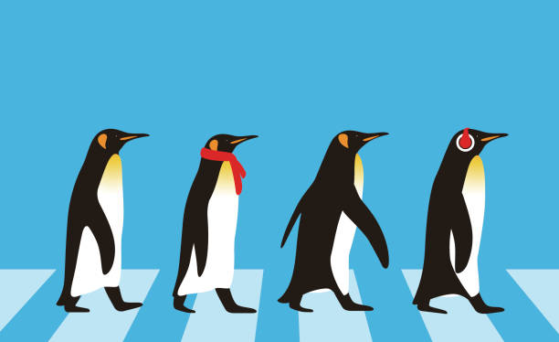 king penguin walking, penguin seed series - penguin stock illustrations