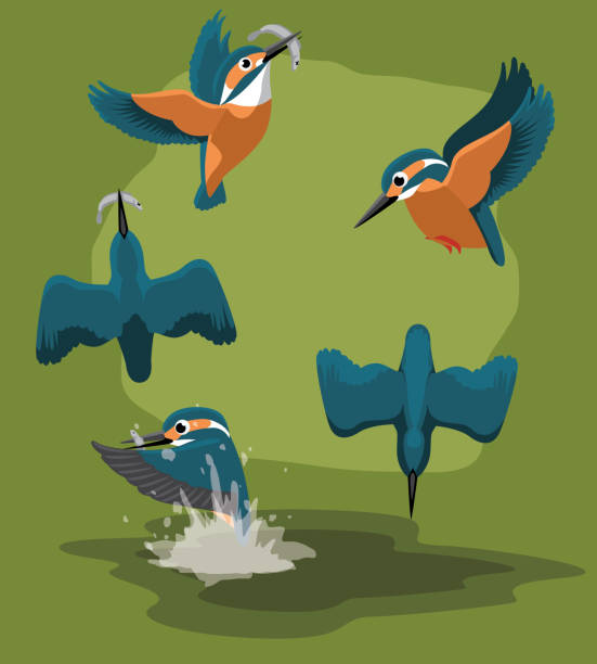 stockillustraties, clipart, cartoons en iconen met ijsvogel vangst vissen cartoon vector animatiereeks - ijsvogels