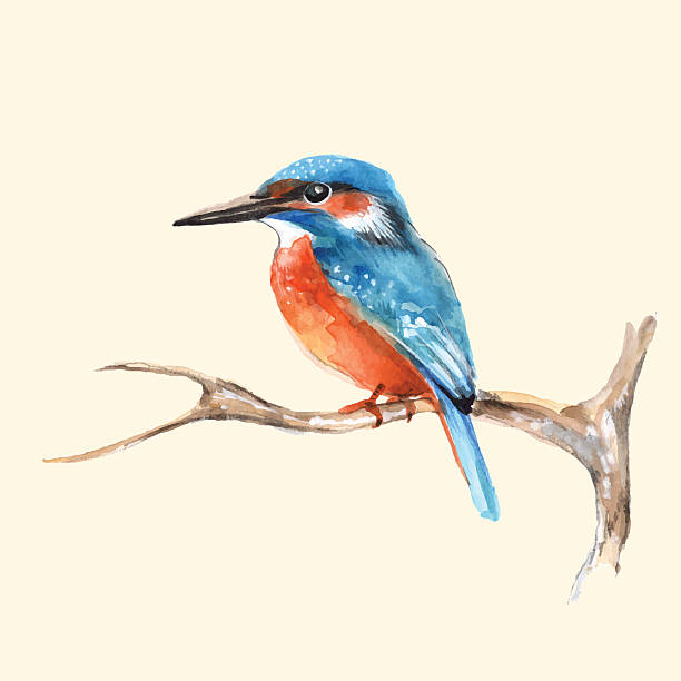 stockillustraties, clipart, cartoons en iconen met kingfisher on branch. vector illustration - ijsvogels