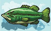 vector illustration of a big largemouth bass.
