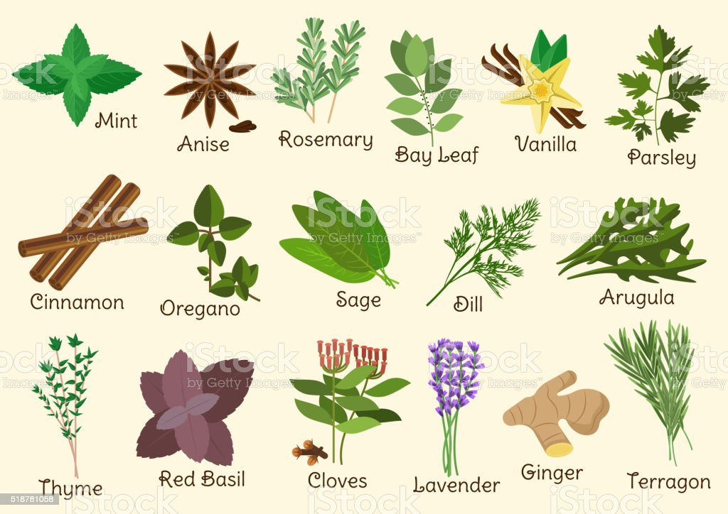 Kitchen condiment, herbs and spices vector art illustration