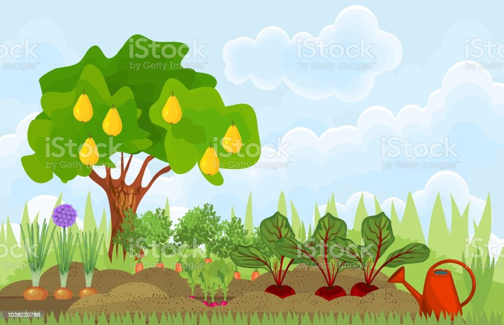 Kitchen garden or vegetable garden with different vegetables and...