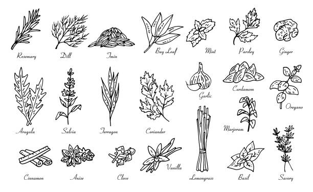 kitchen herbs and spices, vector doodle sketch kitchen herbs and spices, vector doodle sketch set chinese herbal medicine stock illustrations