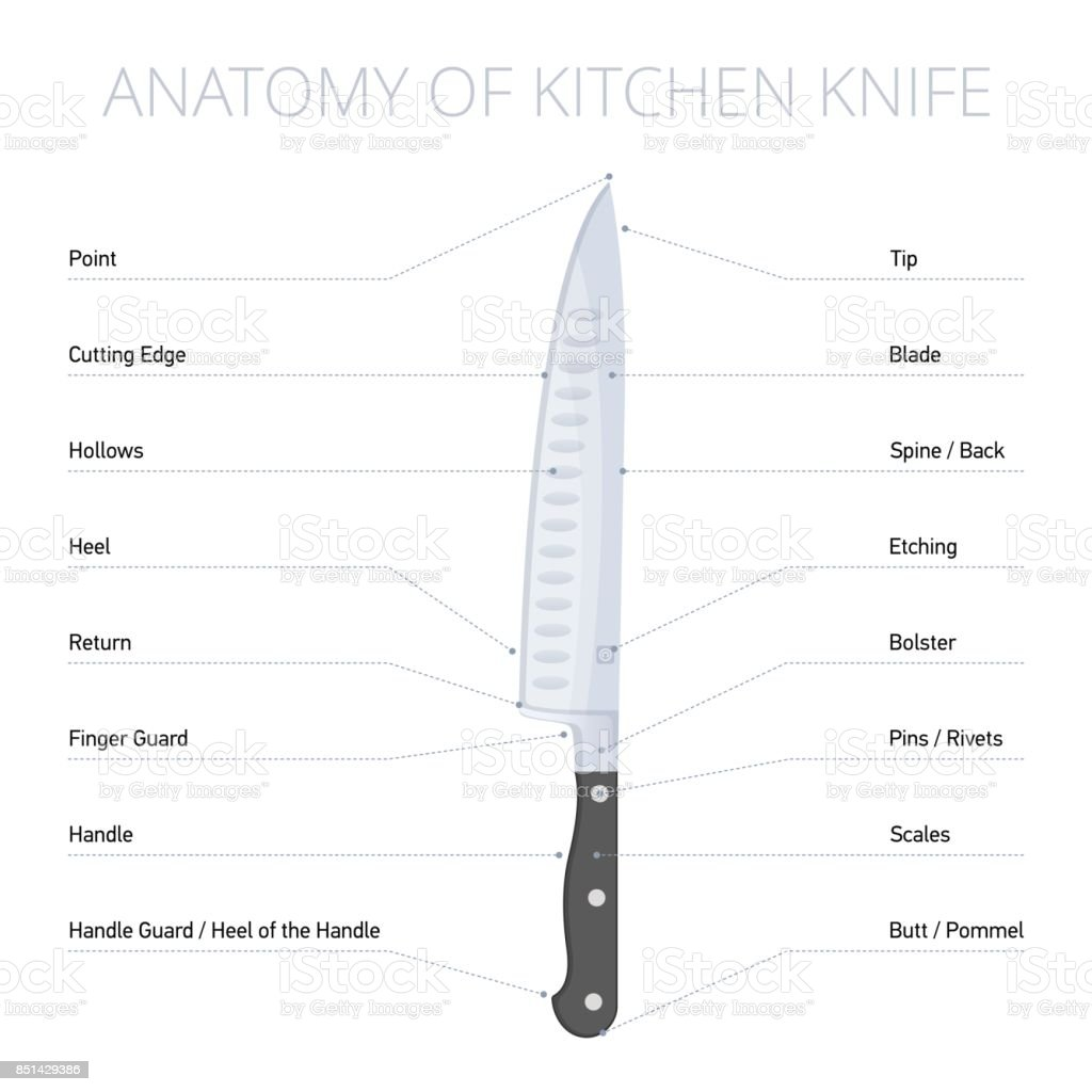 Kitchen Knife Parts Diagram Flat Vector Infographic Stock