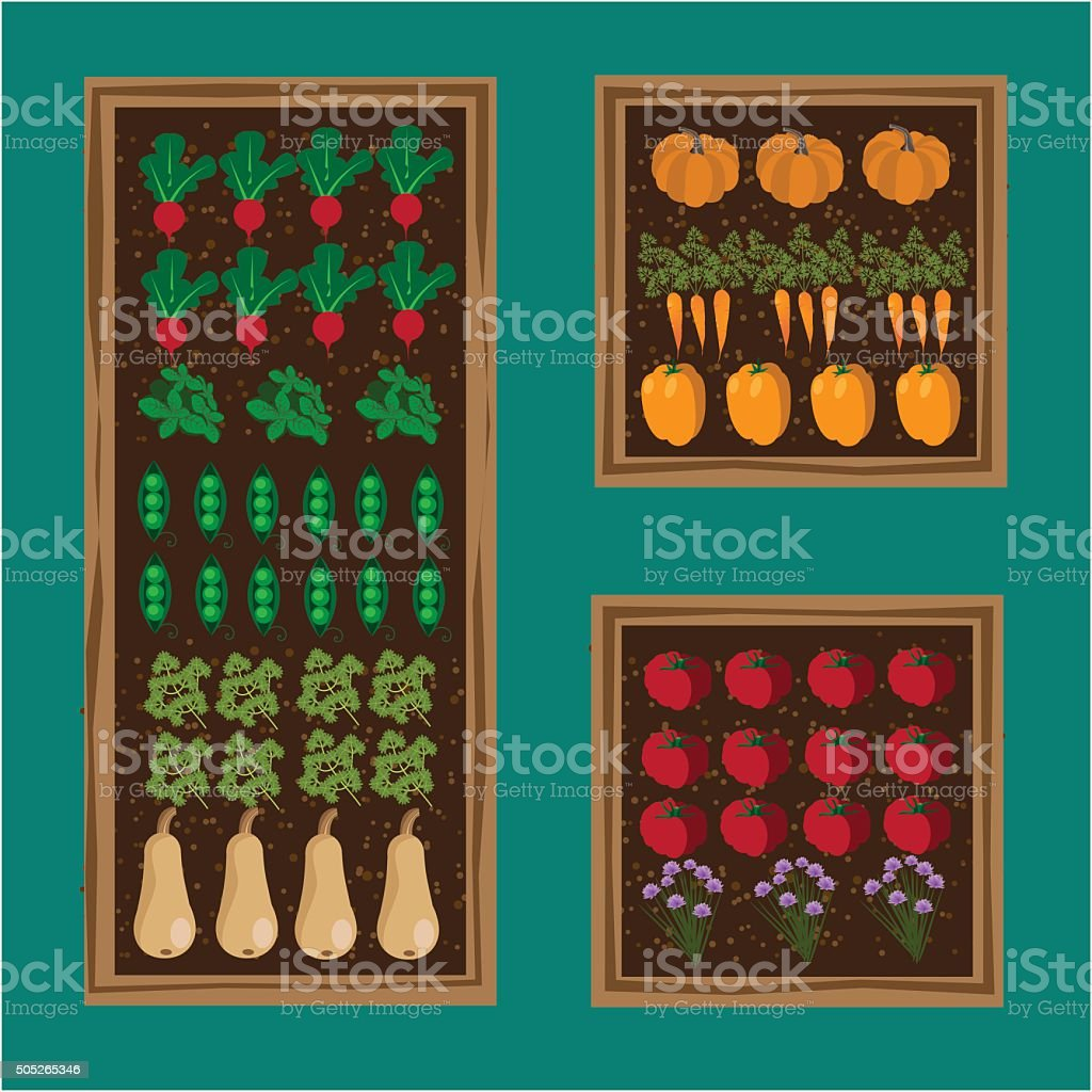 Kitchen Vegetable Garden Planner Flat Design Stock ...