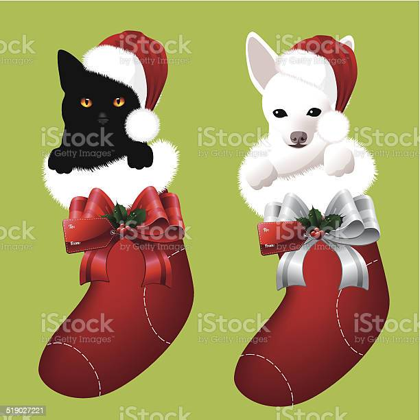 Kitten and puppy in christmas stockings vector id519027221?b=1&k=6&m=519027221&s=612x612&h=6ygmsidwp0i76jo9yqaxzcwpgd80j68otzfmfdr iau=