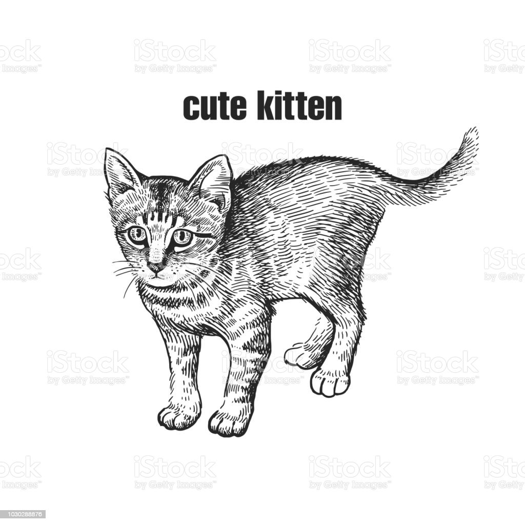 kitten cute pet handmade black and white drawing of a cat stock