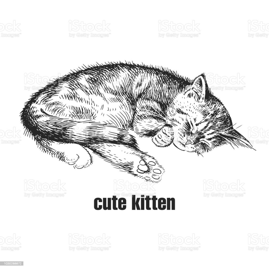 kitten is sleeping cute pet handmade black and white drawing of a