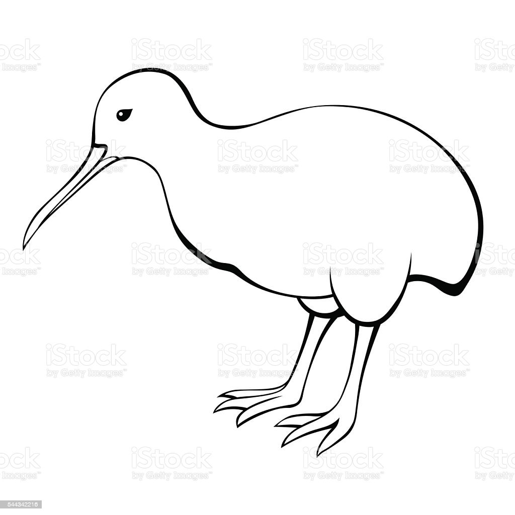 kiwi bird black white isolated illustration vector stock vector
