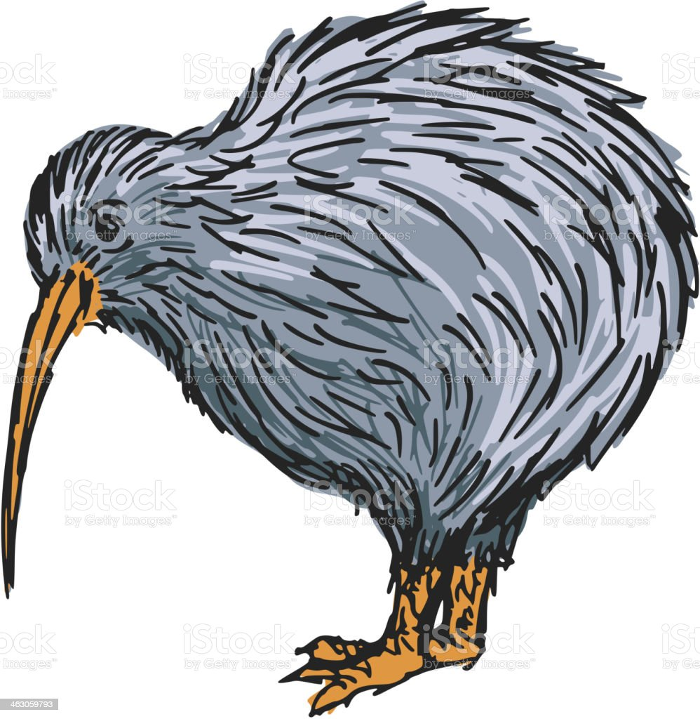 Kiwi Bird Stock Vector Art & More Images of Animal 463059793 | iStock