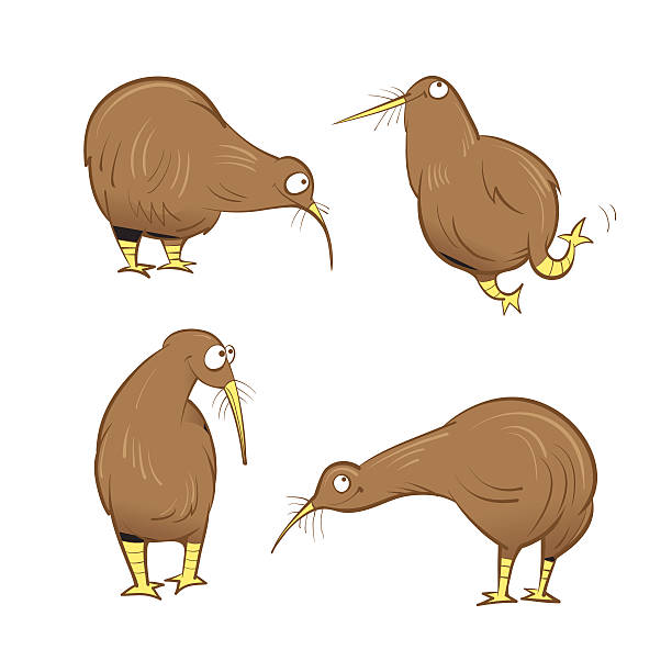 bildbanksillustrationer, clip art samt tecknat material och ikoner med kiwi birds set. - kivik