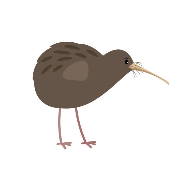 bildbanksillustrationer, clip art samt tecknat material och ikoner med kiwi gullig tecknad fågel ikonen - kivik