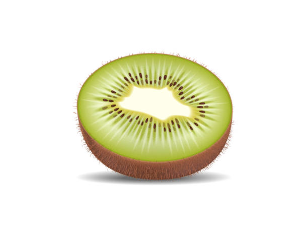 ilustrações de stock, clip art, desenhos animados e ícones de kiwi fruit cut in half slices. high quality natural eco organic ecological fruit for juice, yogurt, pudding, shake, cream, sour milk packaging. realistic detailed vector. - kiwi