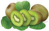 Kiwi fruits and slice with leaves. vector illustration