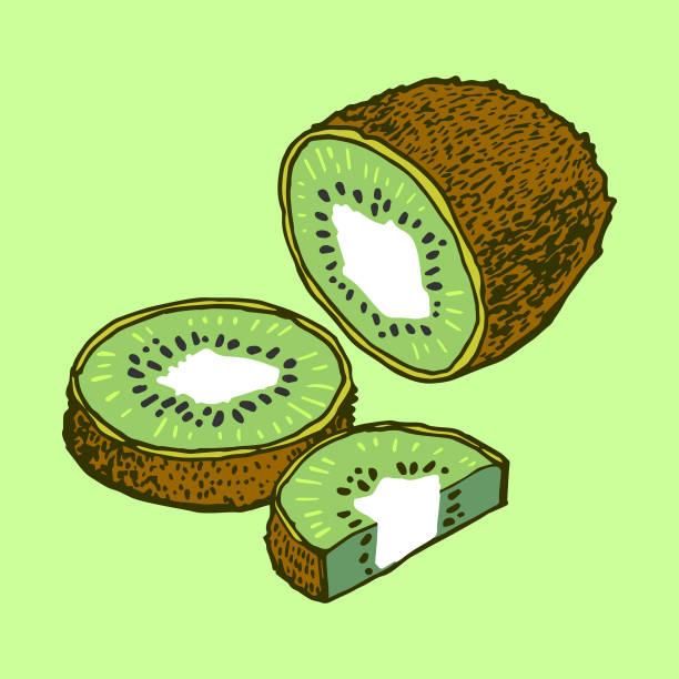Kiwi vector art illustration