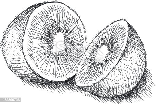 Line Drawing Kiwi : Kiwi stock vector art more images of cross hatching