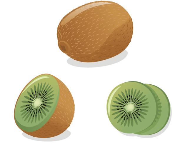 Kiwi-Vektor – Vektorgrafik