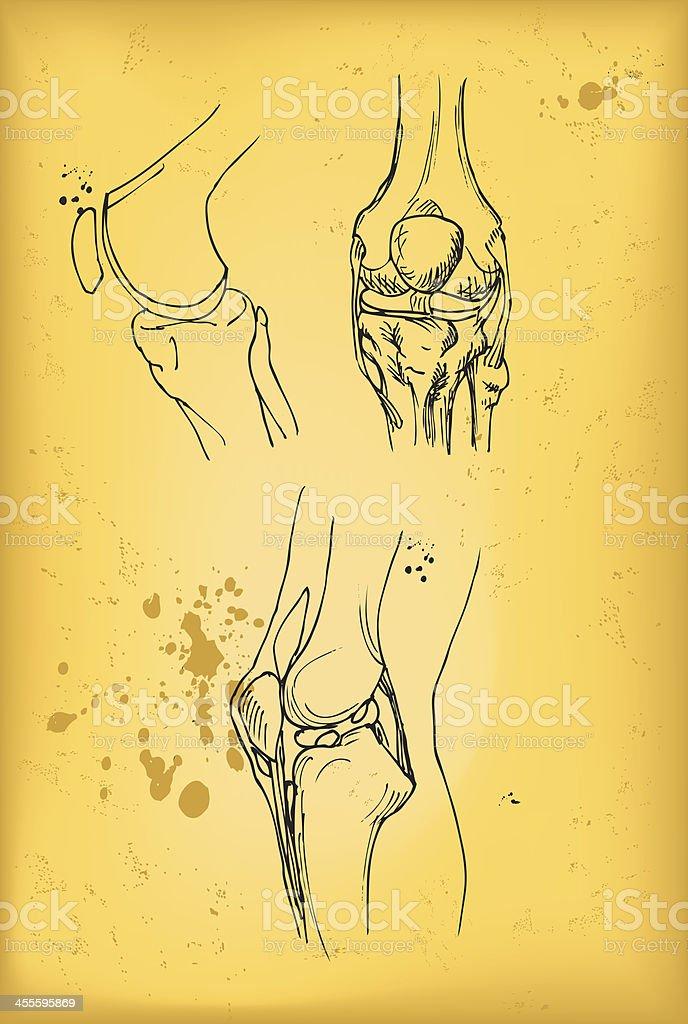 Knee joint vector art illustration