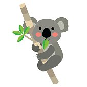 Koala bear animal cartoon character vector illustration.
