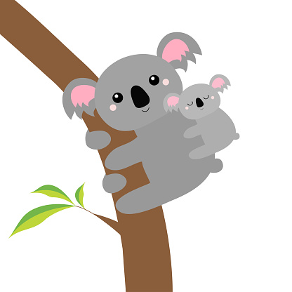 Koala bear face head on the tree branch. Cute cartoon funny baby character. Mother and baby. Kawaii animal. Notebook cover, t-shirt print. Love Greeting card. Flat design. White background.