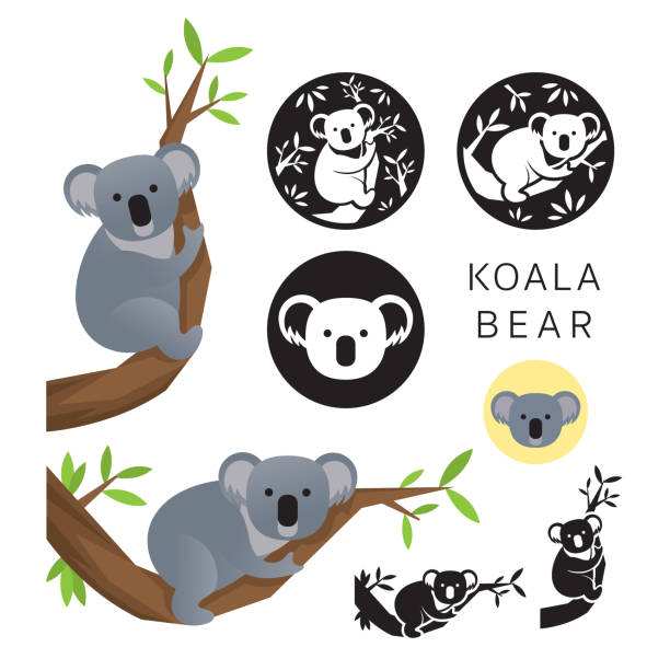 koala bear vector set - koala stock illustrations