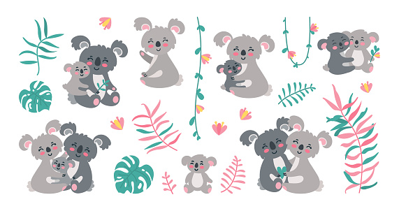Koala family in jungles. Koala parents with babies in leaves, lianas and flowers. Vector illustration