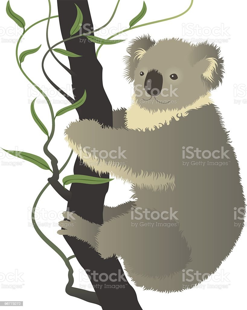 Koala vector art illustration